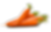 Carrot tissue