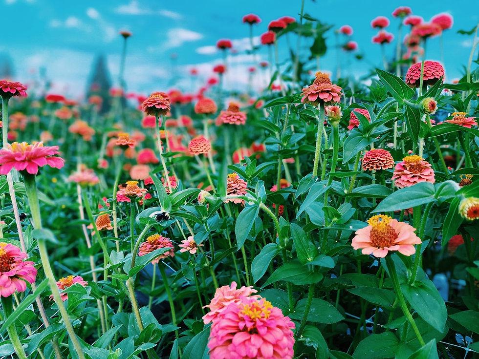 southern oregon flower farm