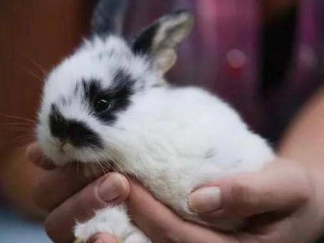 Чего стоит отомстить за убийство крольчонка?