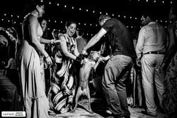 pet friendly dog wedding party riviera maya mexico photographer