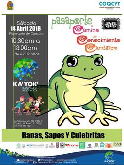 Ranas,Sapos y Culebritas 14abril2018
