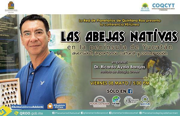 Abejas Nativas RPQR 8Mayo2020 Ricaro Aya