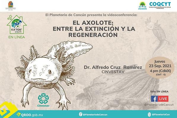 Conservación Axolote Xochimilco 23Sep2021 .jpg