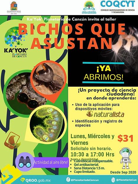 Bichos que asustan Naturalista Sep2020-.