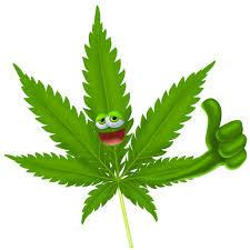 Come riconoscere la cannabis di qualità?