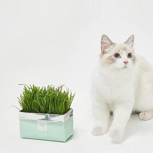 Vetreska懒人无土栽培猫草