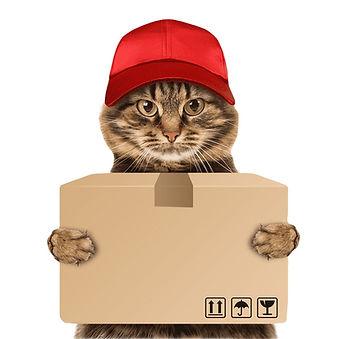 png-transparent-cat-holding-box-illustra