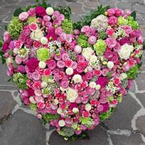 Herz, rosa