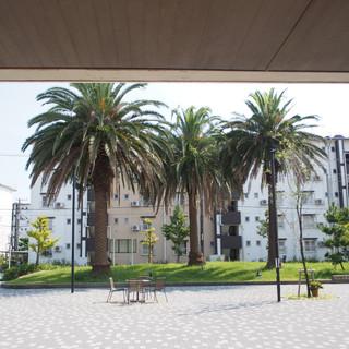 椰子の木がエキゾチックです