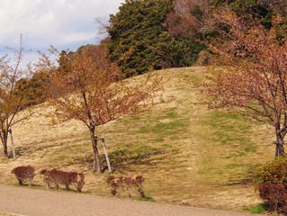 木曜クラブの桜を見に、親水公園へ