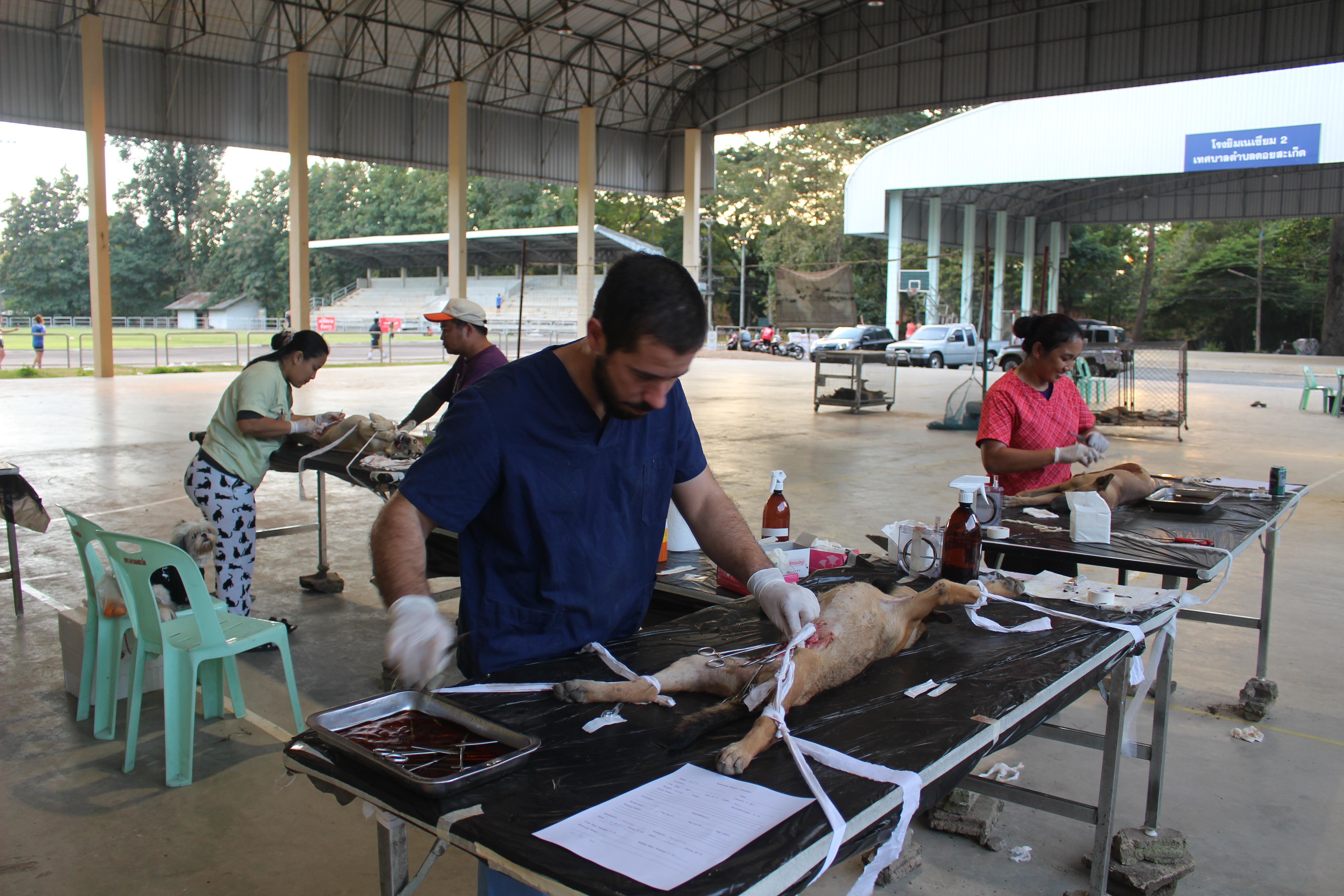 Vet Volunteer Thailand