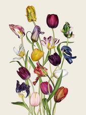 Botanic photography