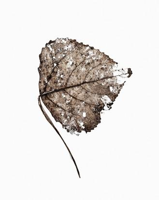 Platina Printed Leaf