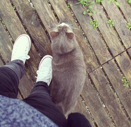 🤔 Pourquoi je ne peux pas laisser mon chat au domicile de ma cat-sitter ?