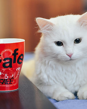 cat-drinking-tea-4597028_1920_edited.jpg