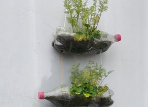 Saiba como montar uma horta vertical em casa
