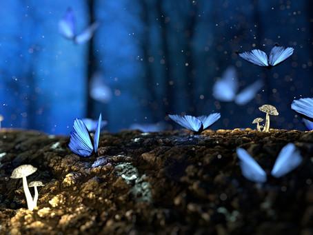 Le câlin du papillon