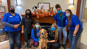 PetsHotel Staff Saves the Life of Doggie Day Camp Regular
