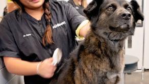 Stylist Spotlight: Jessica - 13 years with PetSmart