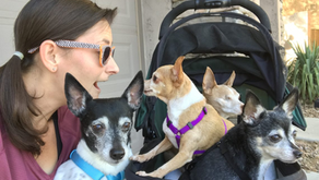 PHO Associate, Heidi, Embodies 'Anything For Pets' by Rescuing the Underdogs