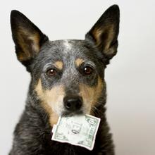 March Wellness Tip: Financial Wellbeing