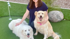 Hear why Julia, VP Human Resources - Offices, has enjoyed #LifeAtPetSmart for 10+ years