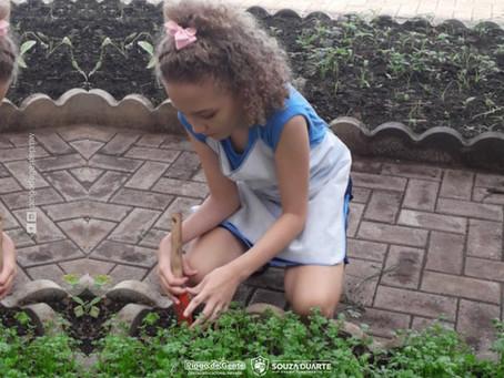 A importância da horta na escola para a educação ambiental.