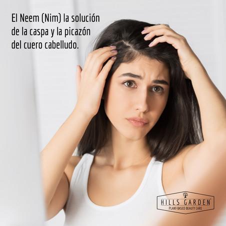 El Neem (Nim) la solución de la caspa y la picazón del cuero cabelludo.