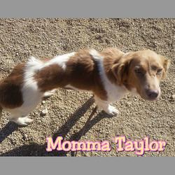 Momma Taylor