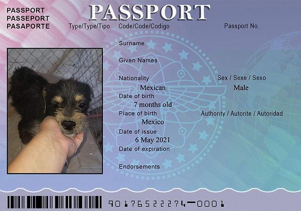 MOM Passport May 1.jpg