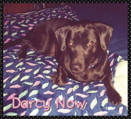 Darcy Now