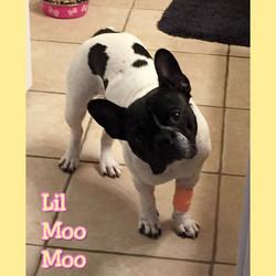Lil Moo Moo
