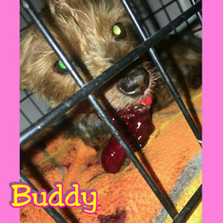 Buddy Oral Surgery
