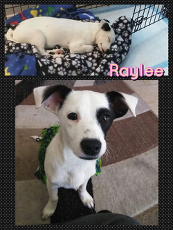 Raylee