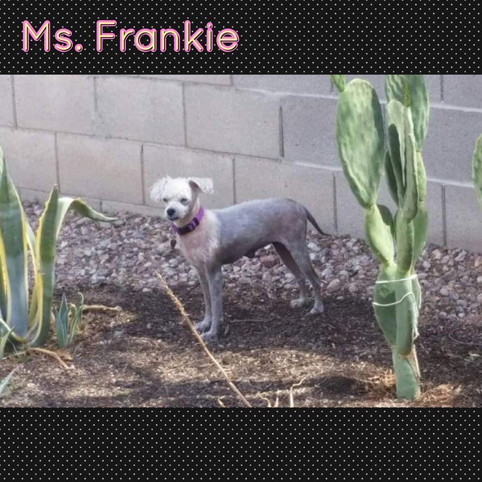 Ms Frankie