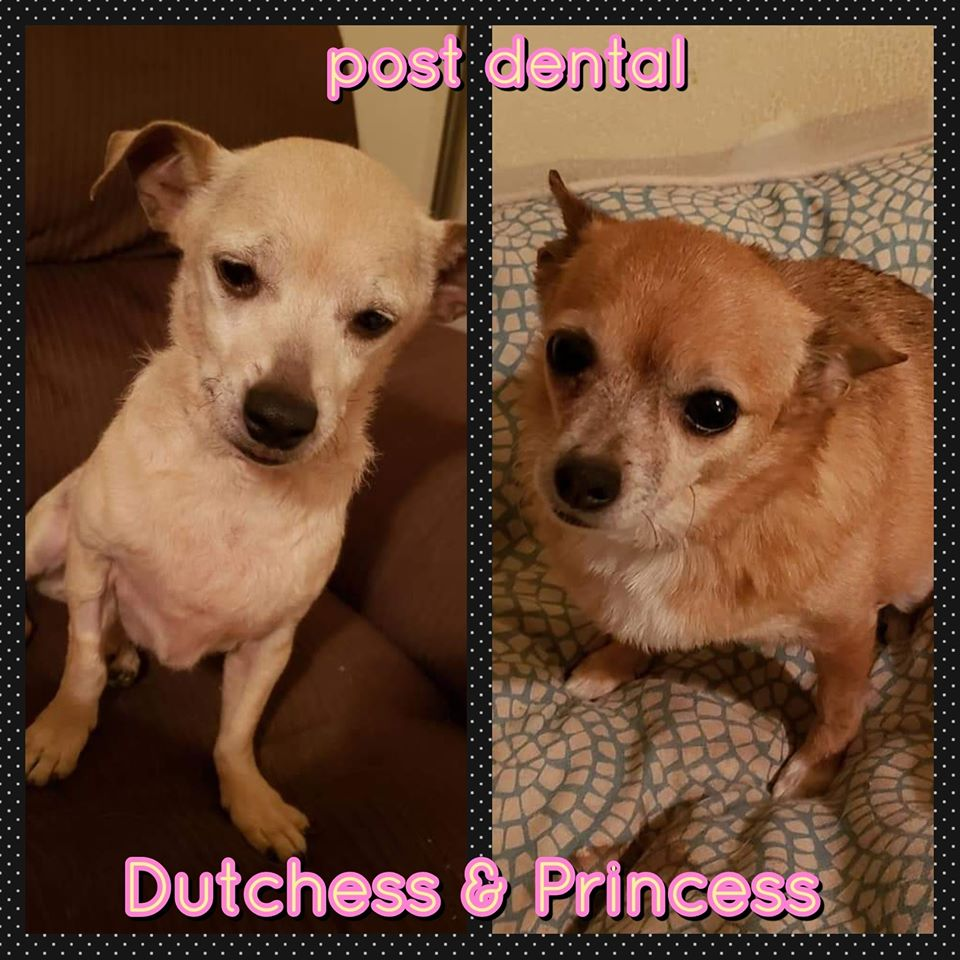 Dutchess & Princess