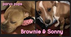 Brownie & Sonny