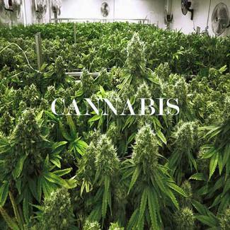 Finding Marijuana Companies Online