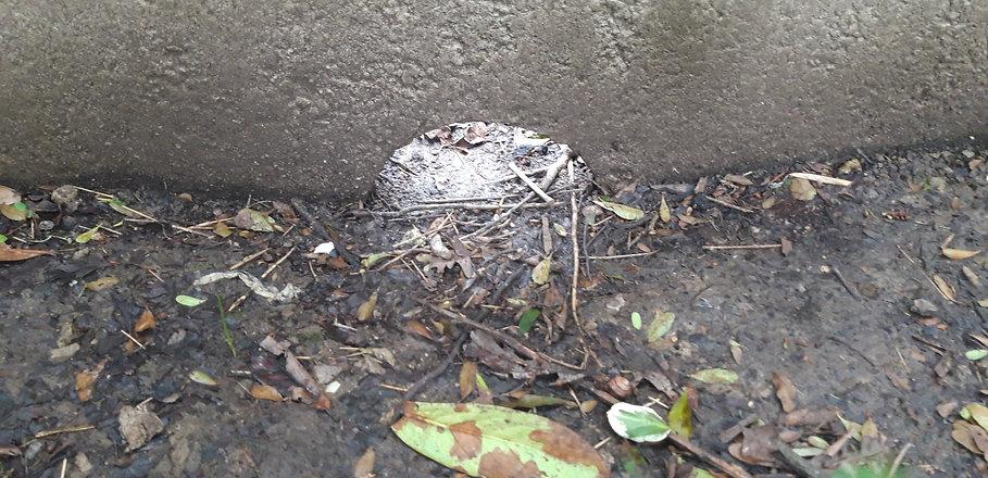 Hedgehog hole.jpg