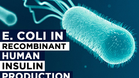 E.Coli in Recombinant Human Insulin Production