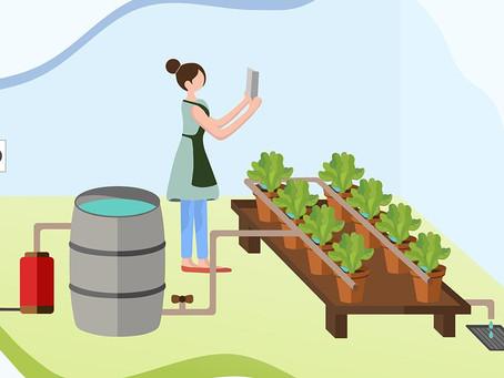 Hydroponic Farming : Benefits