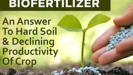 Biofertilizers - An answer to hard soil and declining productivity of crop