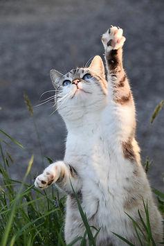 cat-5098930_1920.jpg