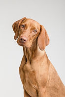 dog-3277414_1920.jpg
