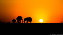 levé_de_soleil__Elephants_1