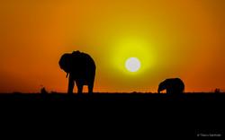 Levé_de_soleil_2_Elephants