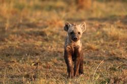 bb hyène 2