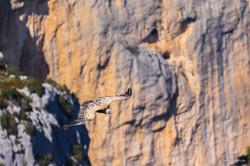 vautour 7 vol verdon