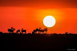 Levé_de_soleil_antilopes
