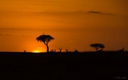 lever de soleil gazelles 5  expo